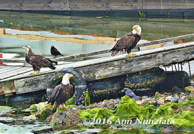 eagles2_img_0019
