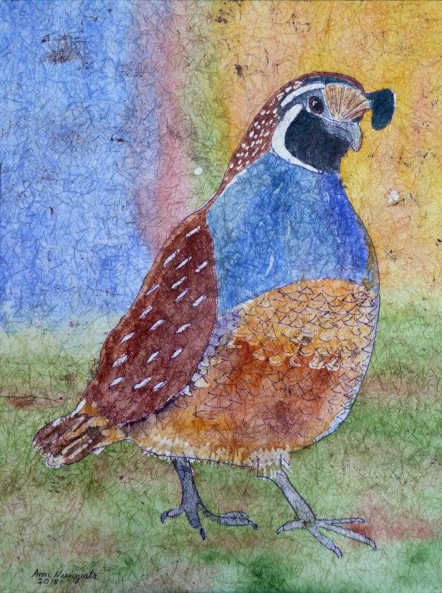 quailStrut-4web-P1070522